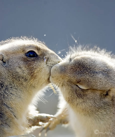 animals-kissing-10