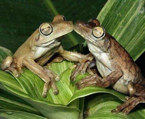 animals-kissing-animals--large-msg-132822710232