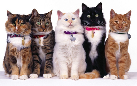 simplycats-5-cats-in-a-line