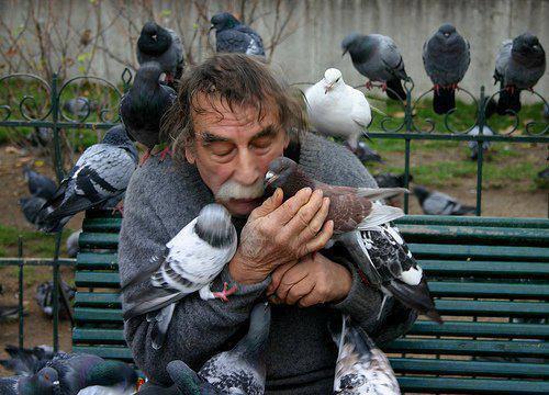 man kissing pigeons
